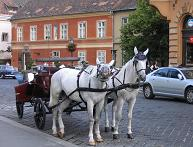 Carriage in Budapest