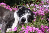 Dog and Flowers