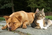 Dog and Cat in Harmony