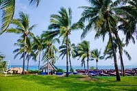 Coconut Trees and Lawn
