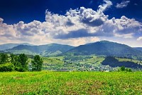 Meadow with Trees and Shrubs in Mountains