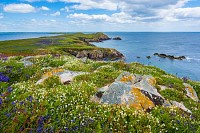 Saltee Island Great, Ierland