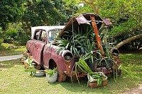 Vintage Car with Plants