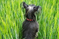 a Dog in the Grain