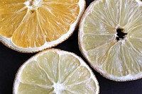 Citrus and Lemon Slices