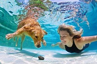 Woman playing with Retriever puppy in Pool