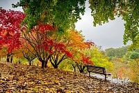 Bench in autumn park during the rain