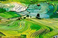 Terraced rice field in Laocai province, Vietnam