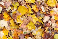 Colorful pile of autumn leaves