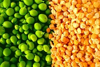 Orange & green peas legume
