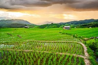 Terrace rice fields at Chaing Mai, Thailand