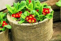 Red flowers in big sack pots