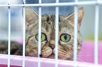 Closeup of kitten looking through a cage