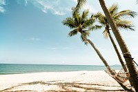 Coconut palm tree on tropical beach in summer