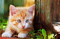 Cute little red kitten playing outdoor