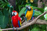 Colorful macaws in the forest