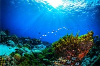 Underwater world coral reef