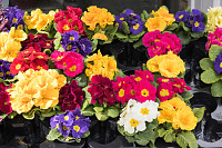 Spring Bright Beautiful Flowers Plant are in Garde