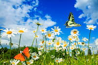 beautiful different butterflies flutter in a brigh