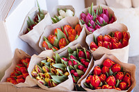 Beautiful colorful bouquets of tulips in craft pap