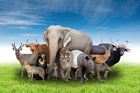 group of asia animals with fresh green grass and b
