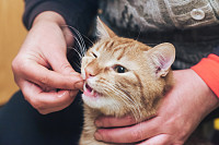 Ginger Cat does not Want to Eat and Eats by Hand M