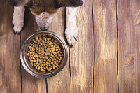Bowl of dry kibble dog food and dogs paws and neb