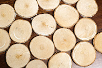 Composition of cut wooden round circles. Trunk sli