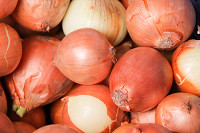 Fresh onions. Onions background. Ripe onions. Onio