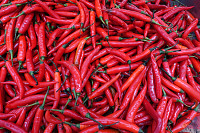 Close up of fresh red chilli background, selective