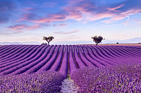 Lavender field summer sunset landscape near Valens
