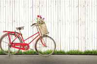 bicycle vintage with bouquet flower concept of lov