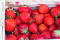 Fresh bright red strawberries in a wooden basket o