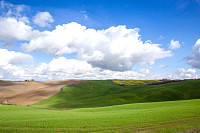 Green hills of Tuscany in early spring