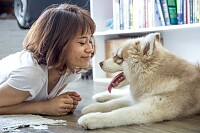 Woman Lying on the Floor Beside Siberian Husky