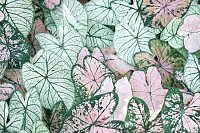 Special Coloured Leaves