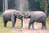 Two Elephants on The Road