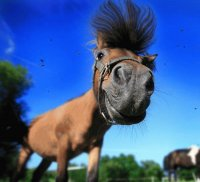 Funny horse :)