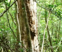 spirit of the congaree national forest