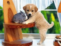 puppy-and-the-bunny