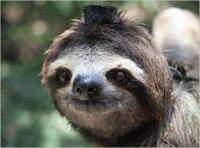 Sloth in a Hat