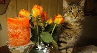 Cat, flowers and Candle
