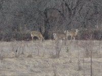 Yeah!  The deer are back again this year!