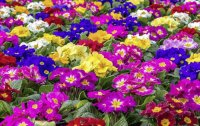 Amazing Colorful Flowers