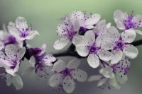 Pretty White and Purple Flowers