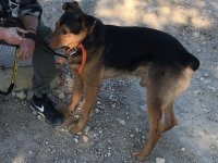 Dog up for adoption: Krak
