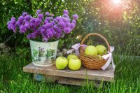 Flowers and Green Apples-Still Life