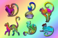 Curly tailed colour cats