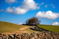 blue sky and trees over stone wall