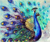 Beautyful Peacock